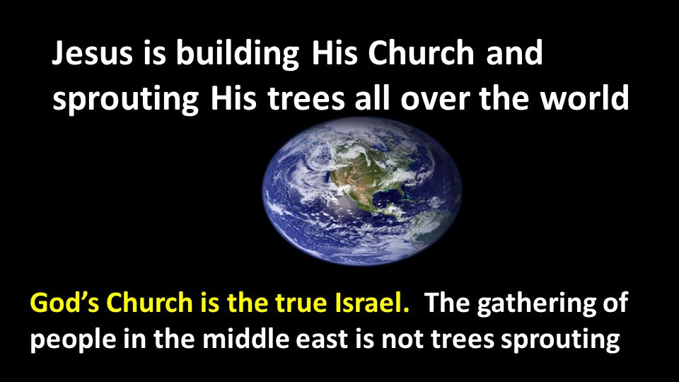 Jesus is building His Church and sprouting His trees all over the world