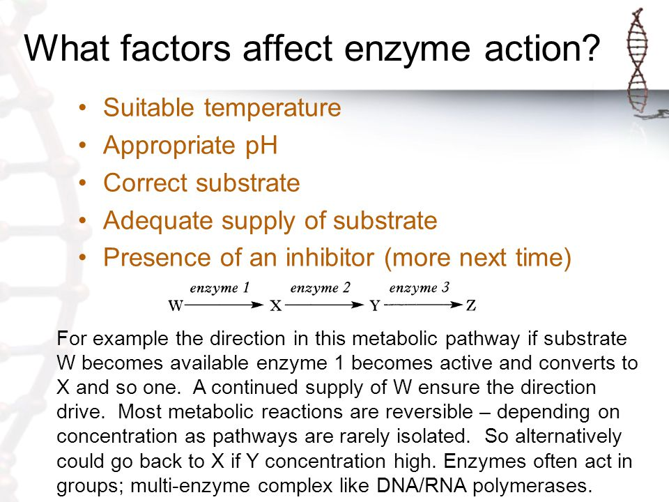 What factors affect enzyme action
