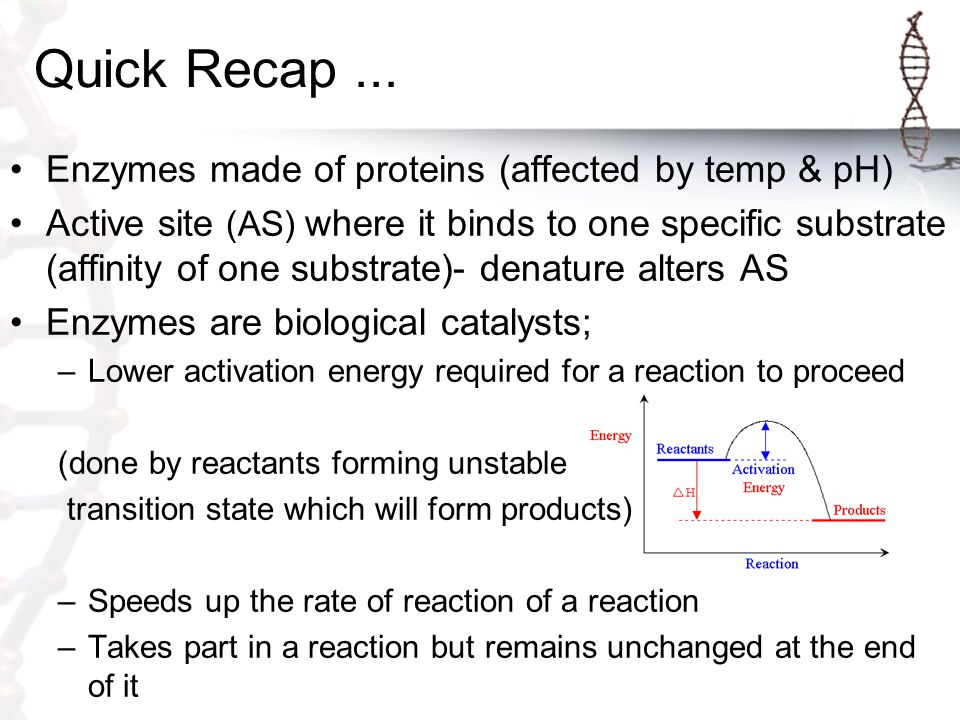 Quick Recap ... Enzymes made of proteins (affected by temp & pH)