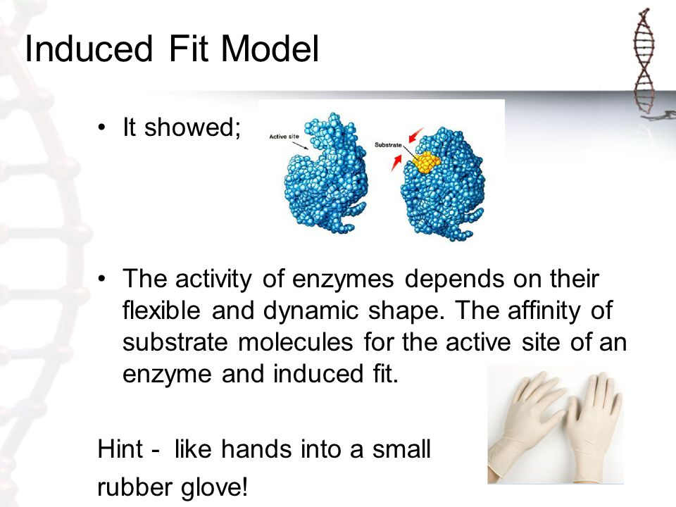 Induced Fit Model It showed;