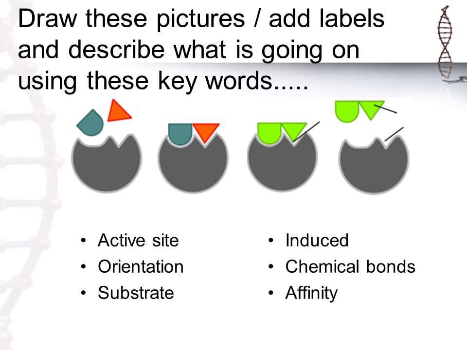 Draw these pictures / add labels and describe what is going on using these key words.....