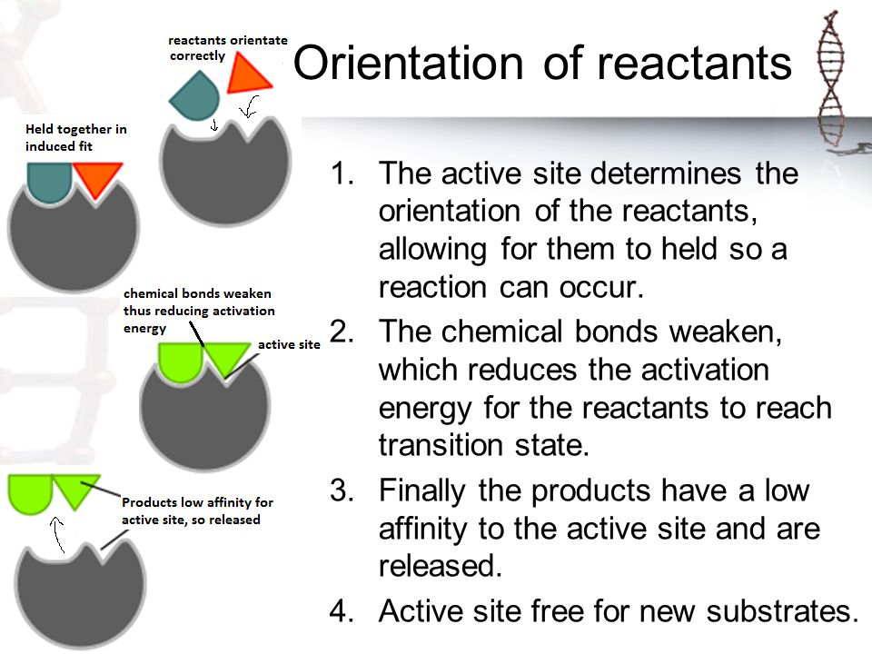 Orientation of reactants