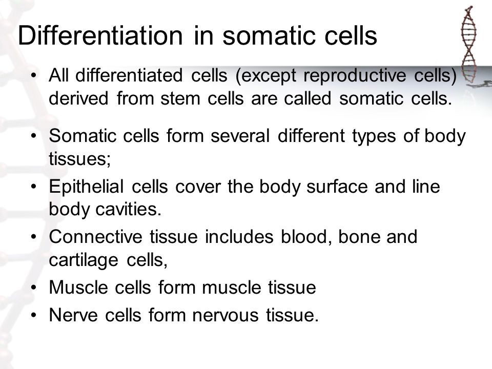 Differentiation in somatic cells
