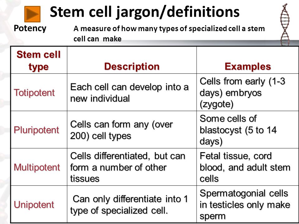 Stem cell jargon/definitions