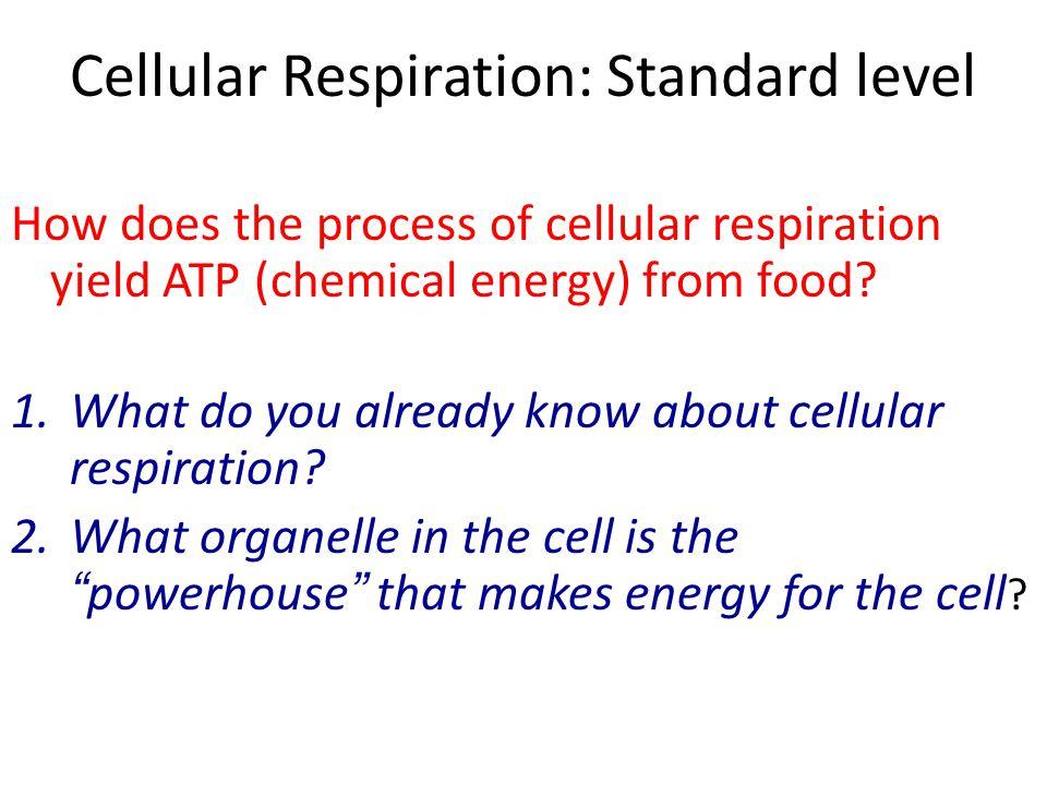 Cellular Respiration: Standard level