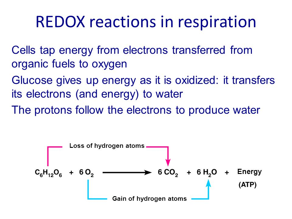 REDOX reactions in respiration
