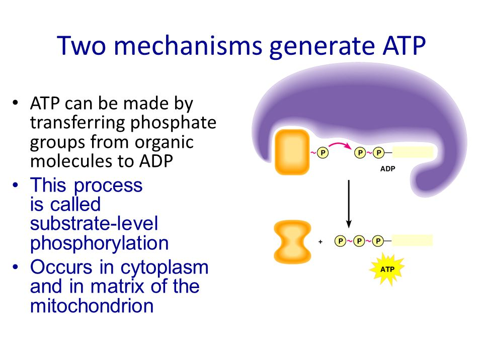 Two mechanisms generate ATP