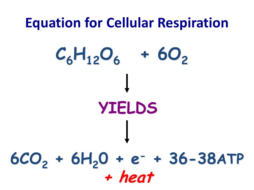 write the equation for cellular respiration 7th grade life science photosynthesis & cellular respiration study guide write the equation for photosynthesis write the equation for cellular respiration.