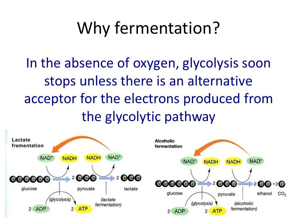 Why fermentation
