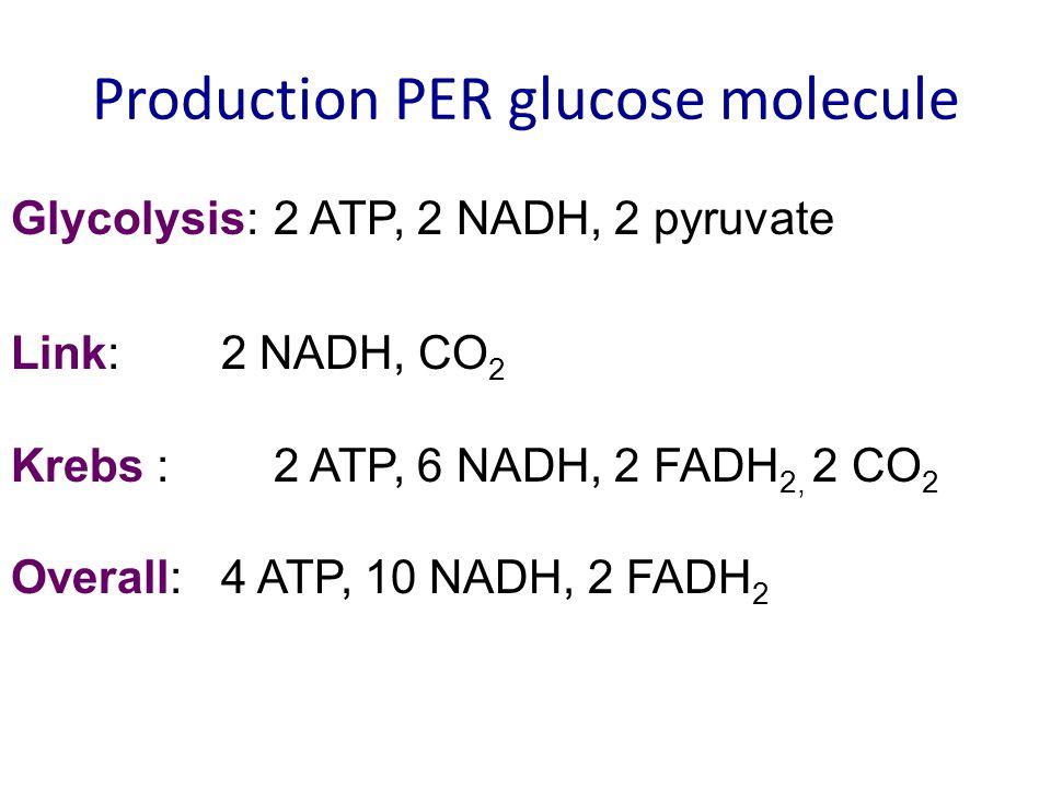 Production PER glucose molecule