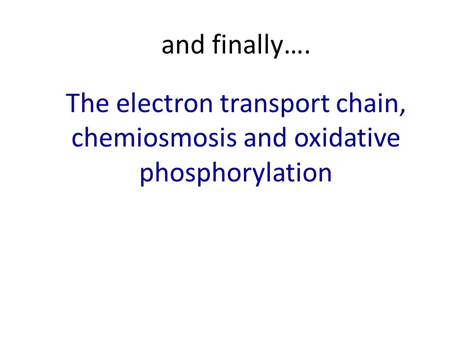 and finally…. The electron transport chain, chemiosmosis and oxidative phosphorylation