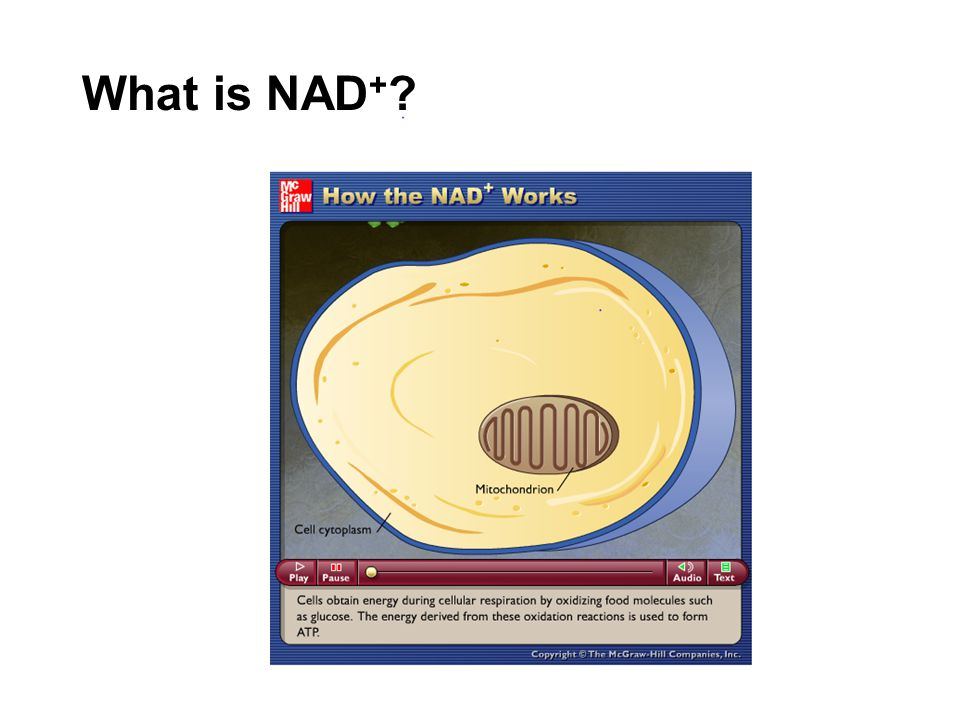 What is NAD+