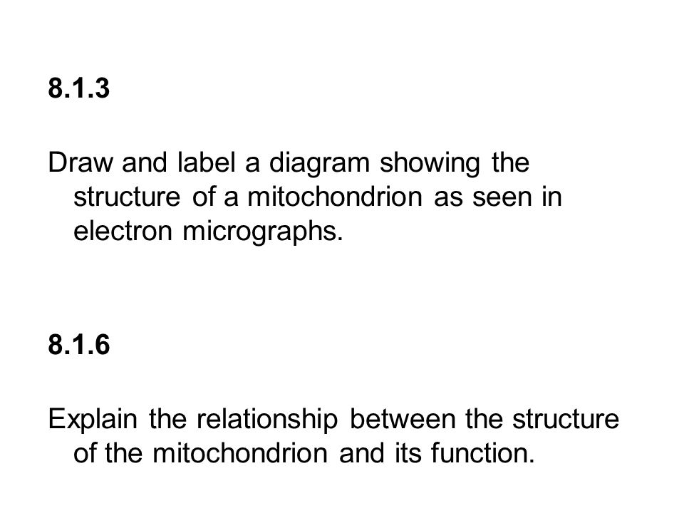 8.1.3 Draw and label a diagram showing the structure of a mitochondrion as seen in electron micrographs.