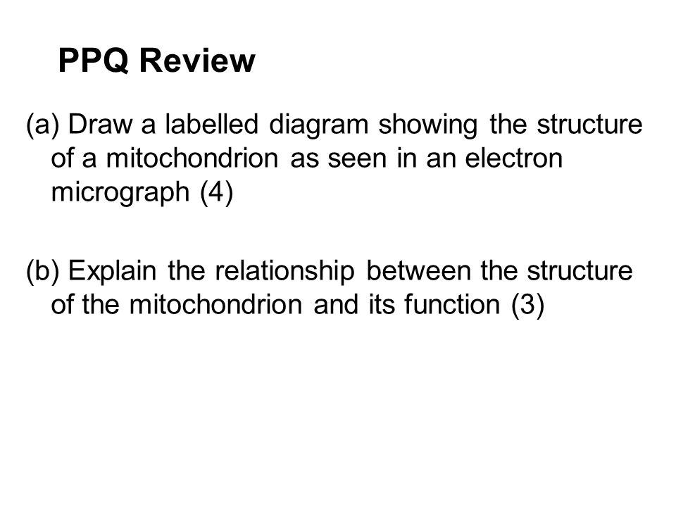 PPQ Review (a) Draw a labelled diagram showing the structure of a mitochondrion as seen in an electron micrograph (4)