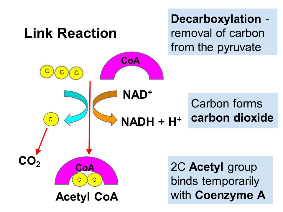 Link Reaction Decarboxylation - removal of carbon from the pyruvate