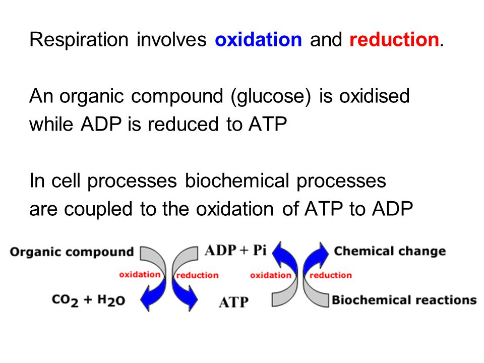 Respiration involves oxidation and reduction.