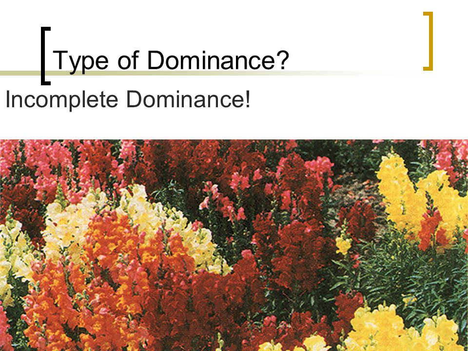 Type of Dominance Incomplete Dominance!