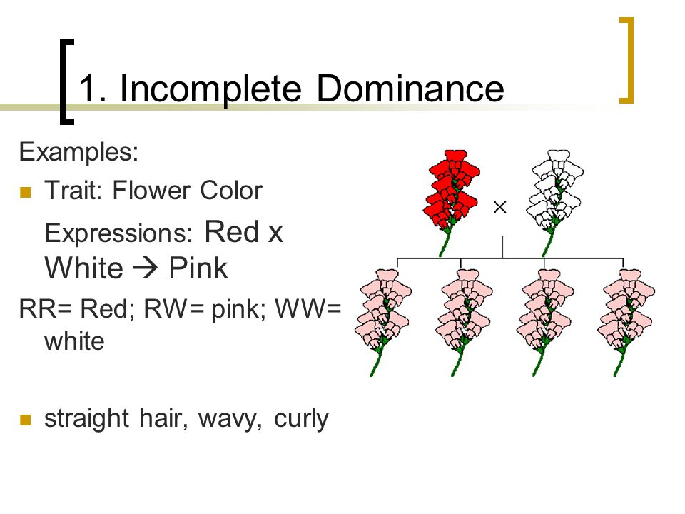 1. Incomplete Dominance Examples: Trait: Flower Color
