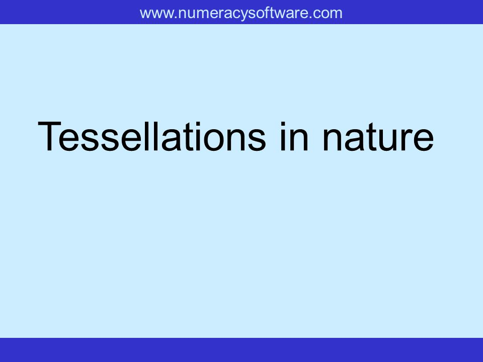Tessellations in nature