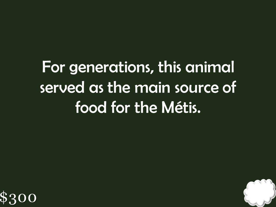 For generations, this animal served as the main source of food for the Métis.