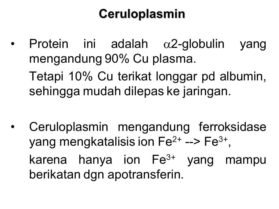 Ceruloplasmin Protein ini adalah a2-globulin yang mengandung 90% Cu plasma.