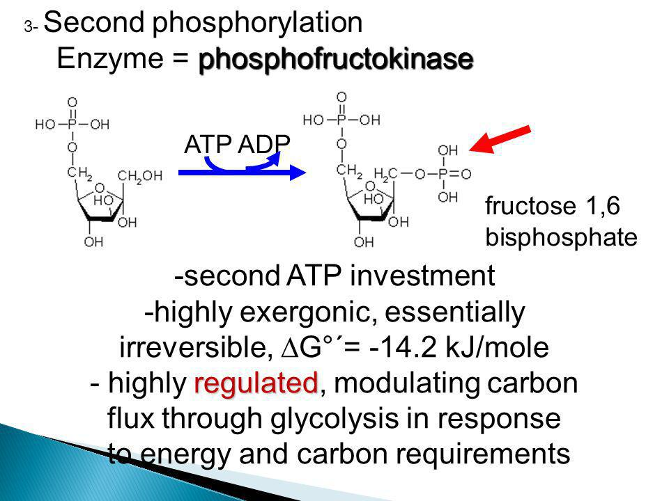 Enzyme = phosphofructokinase