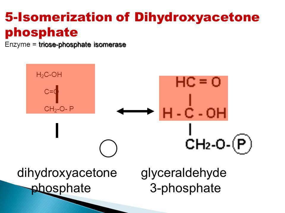 5-Isomerization of Dihydroxyacetone phosphate