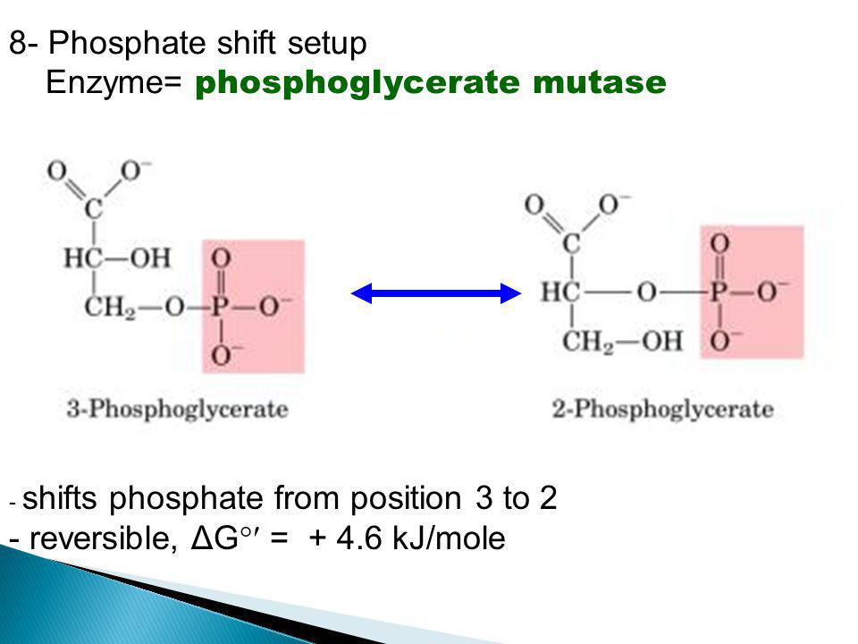 8- Phosphate shift setup Enzyme= phosphoglycerate mutase