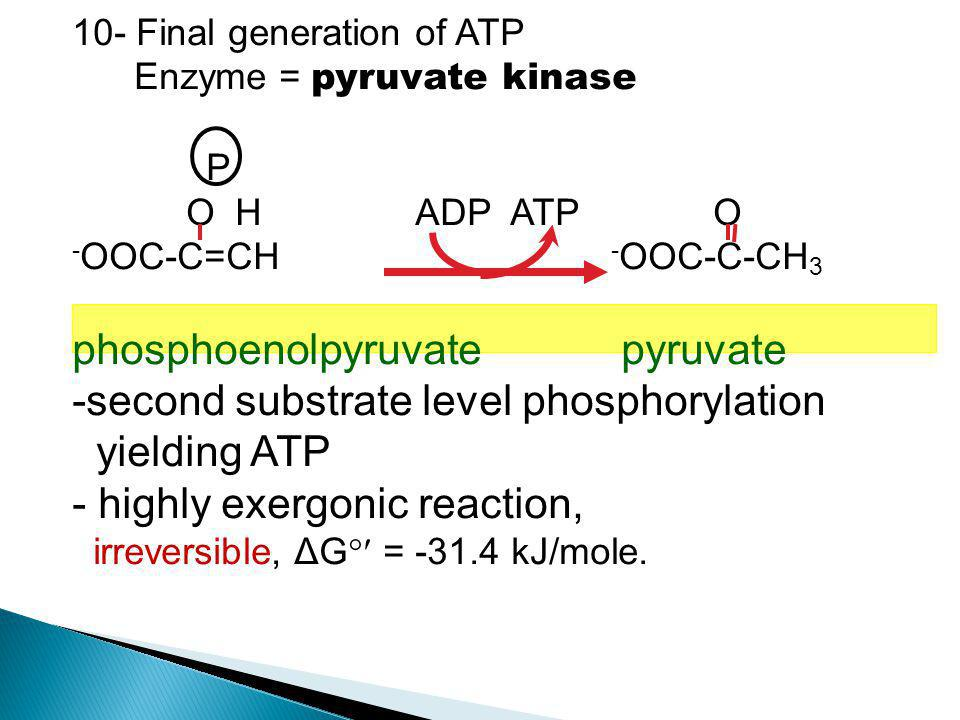 phosphoenolpyruvate pyruvate second substrate level phosphorylation