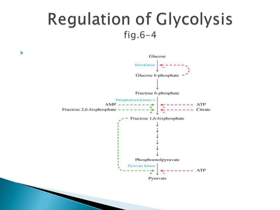 Regulation of Glycolysis fig.6-4