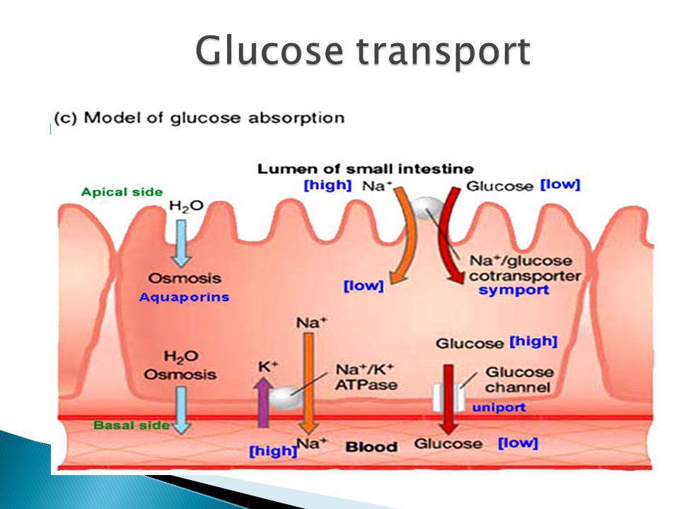 Glucose transport