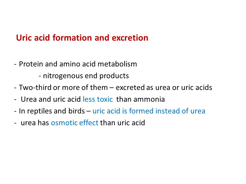 Uric acid formation and excretion