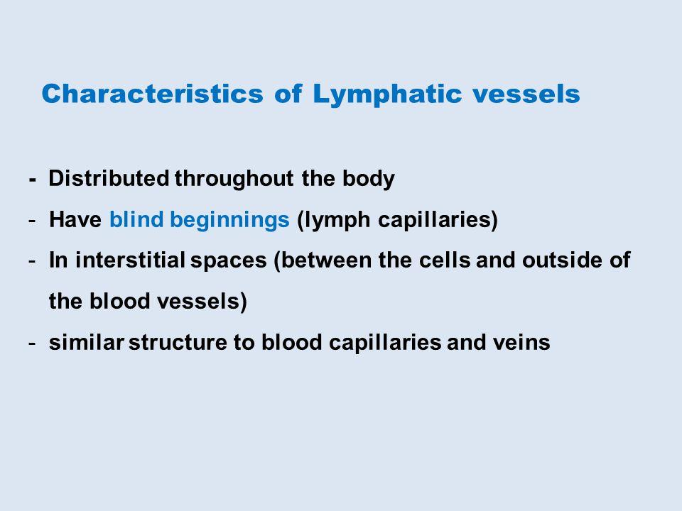 Characteristics of Lymphatic vessels