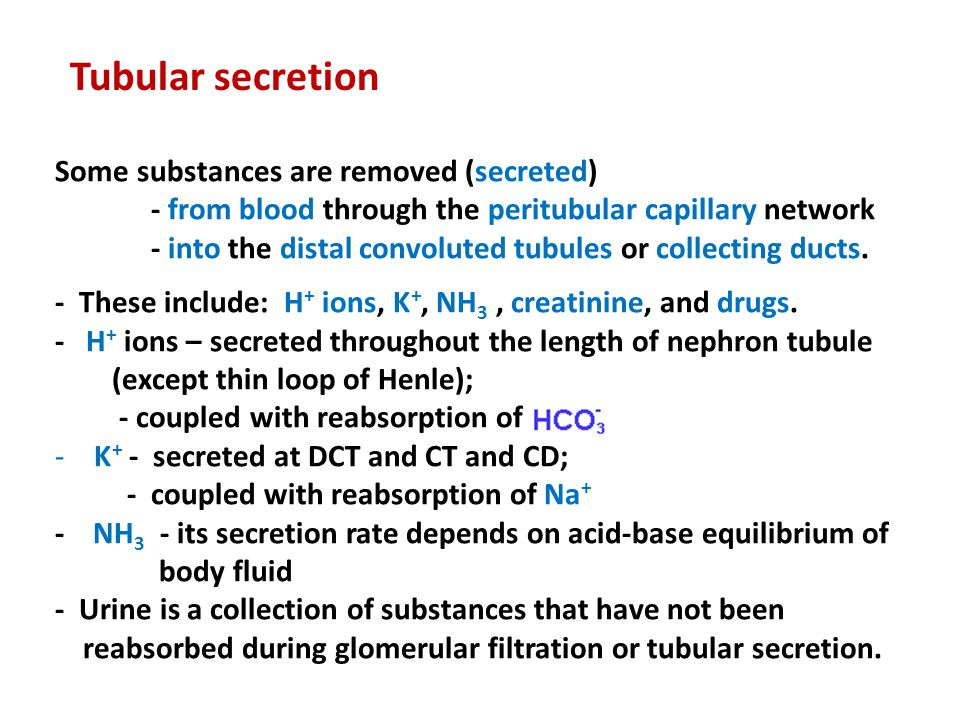 Tubular secretion Some substances are removed (secreted)
