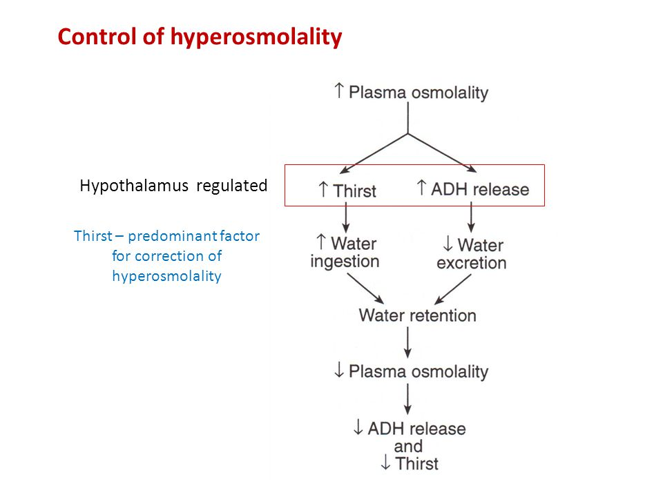 Thirst – predominant factor for correction of hyperosmolality