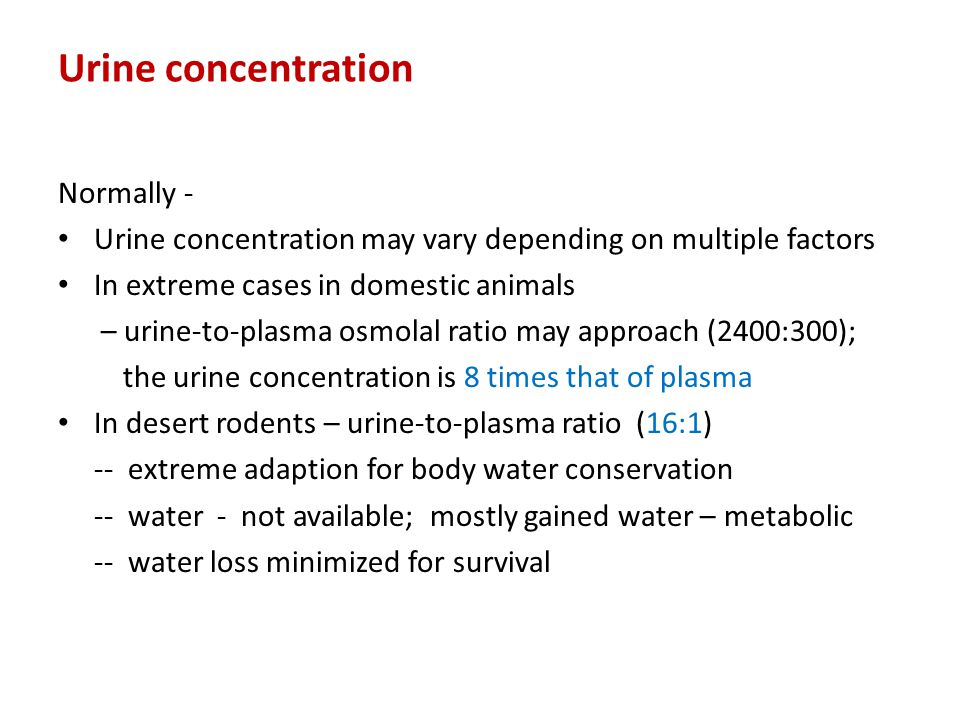 Urine concentration Normally -