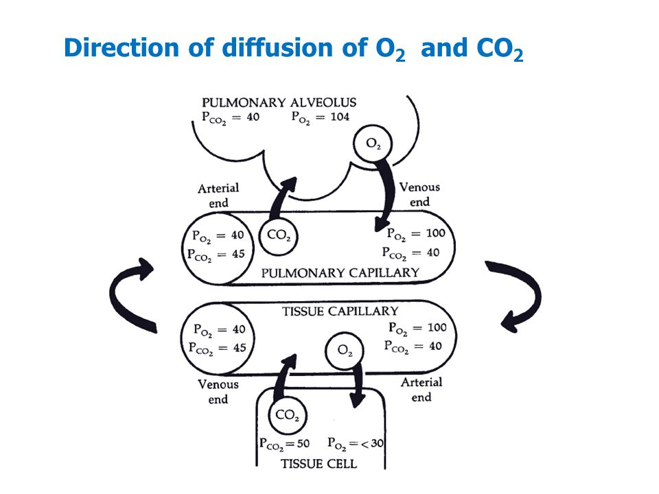 Direction of diffusion of O2 and CO2