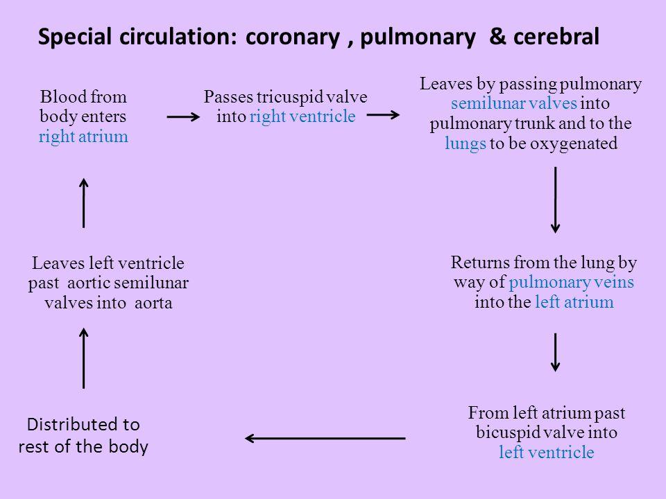 Special circulation: coronary , pulmonary & cerebral