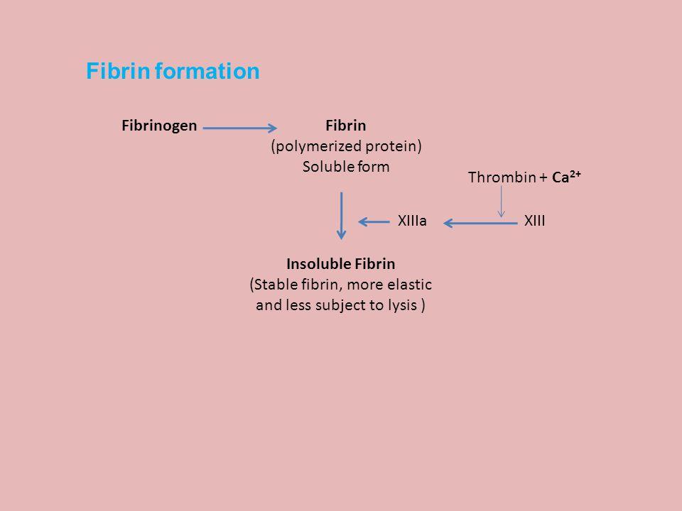 Fibrin formation Fibrinogen Fibrin (polymerized protein) Soluble form