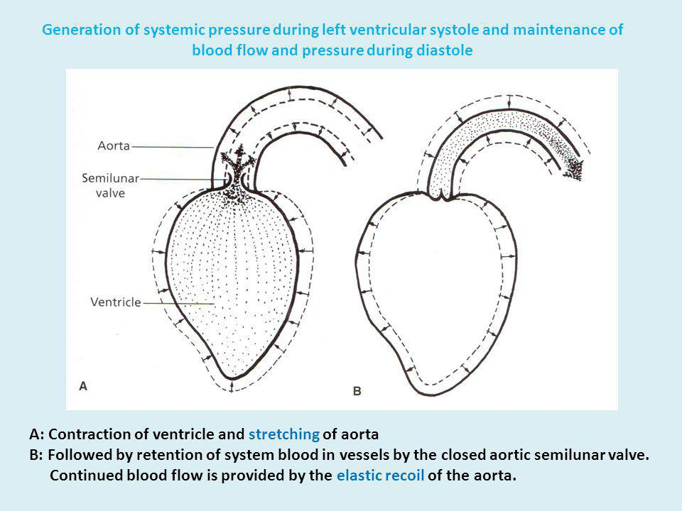 Generation of systemic pressure during left ventricular systole and maintenance of blood flow and pressure during diastole