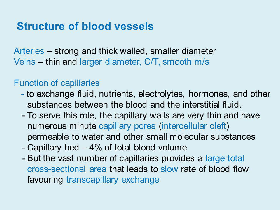 Structure of blood vessels