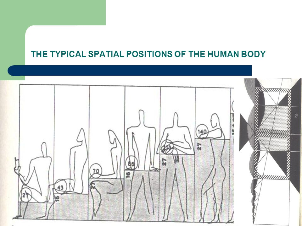 THE TYPICAL SPATIAL POSITIONS OF THE HUMAN BODY