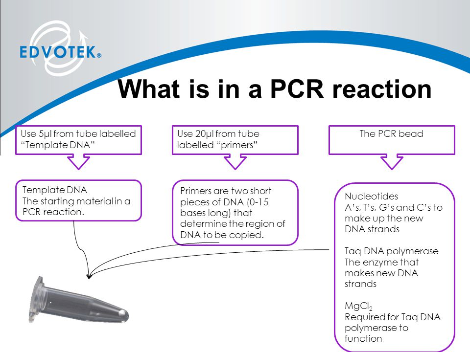 What is in a PCR reaction
