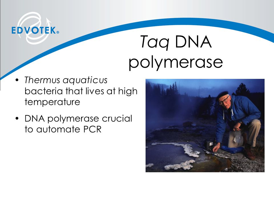 Taq DNA polymerase Thermus aquaticus bacteria that lives at high temperature.