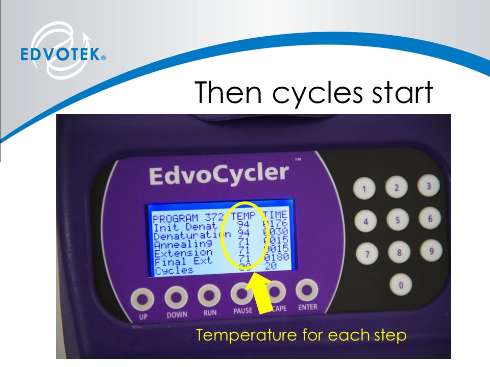 Then cycles start Temperature for each step