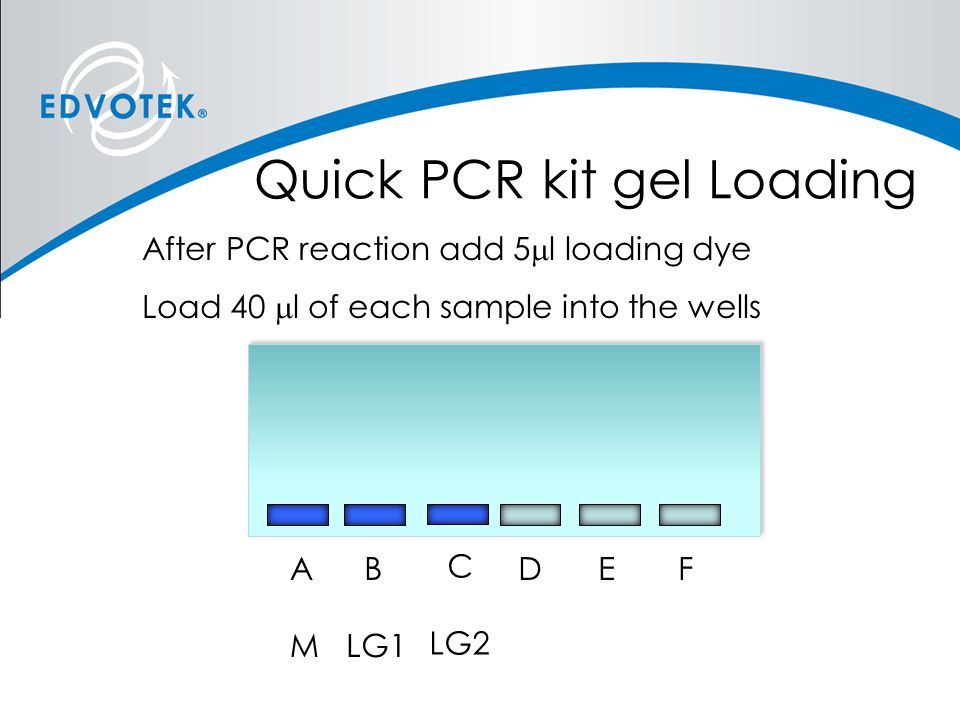 Quick PCR kit gel Loading