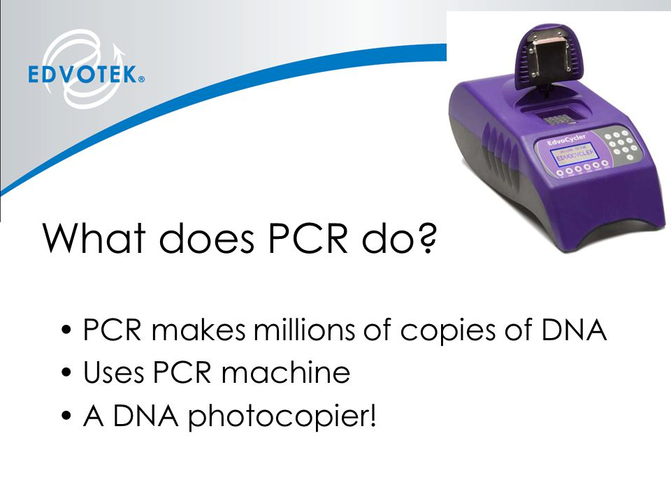 What does PCR do PCR makes millions of copies of DNA Uses PCR machine