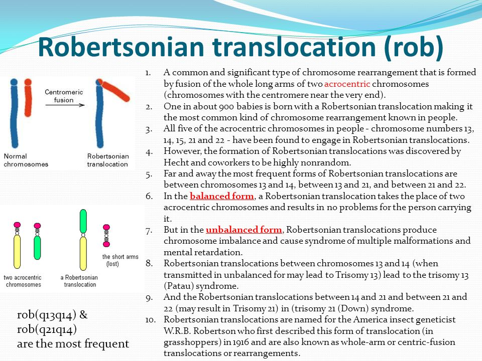 Robertsonian translocation (rob)
