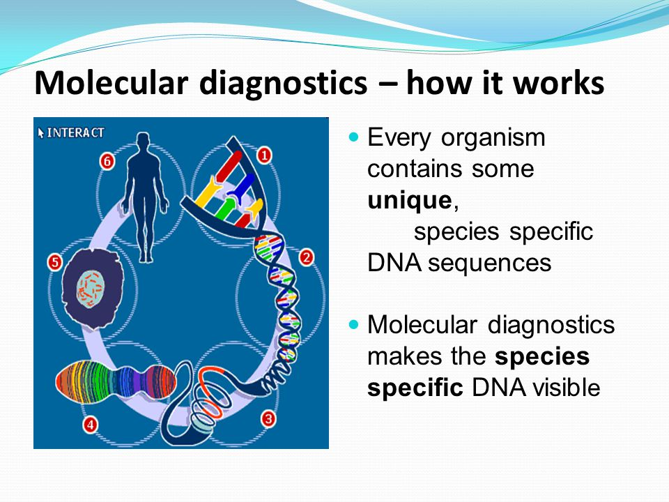 Molecular diagnostics – how it works