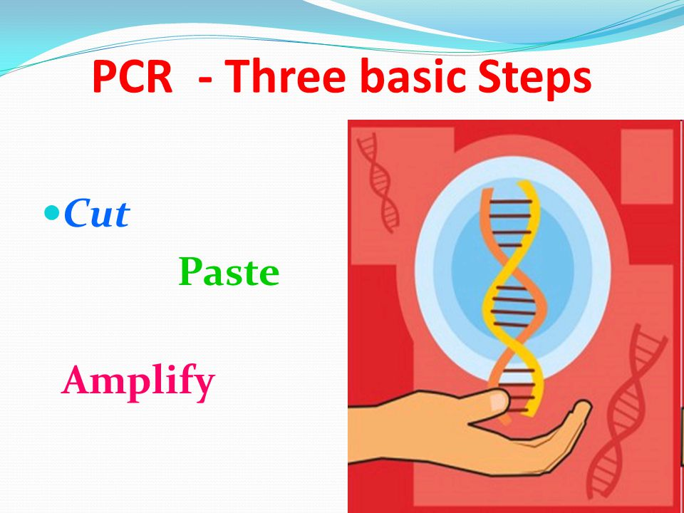 PCR - Three basic Steps Cut Paste Amplify